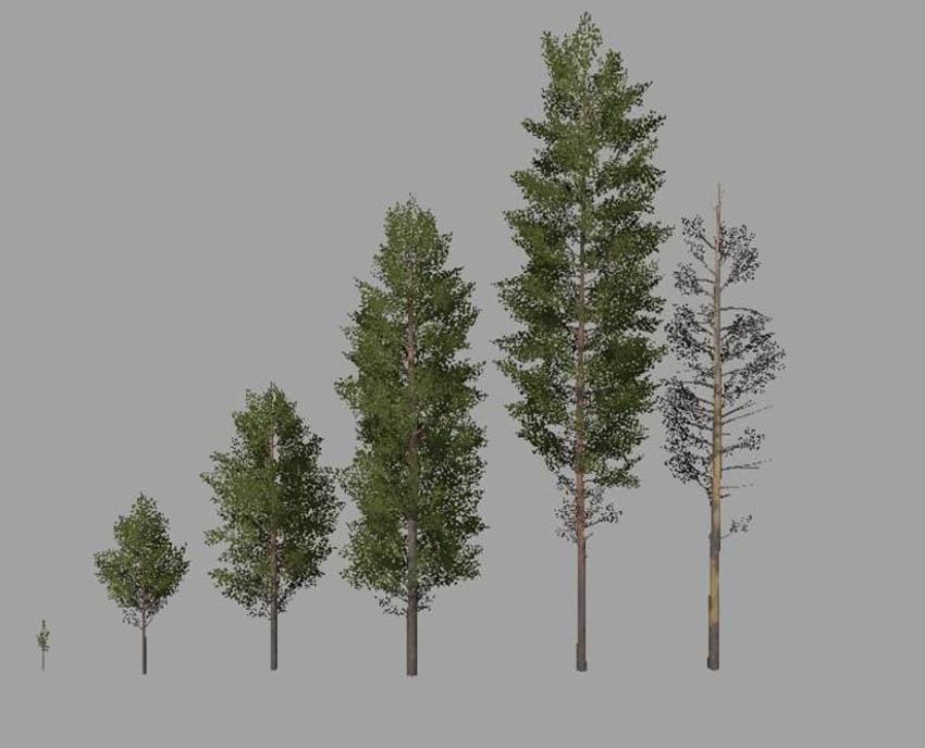 Pack Tree v 1.0