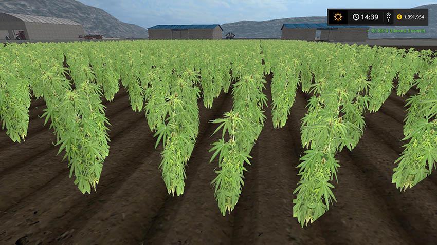Cannabis Crop v 1.0