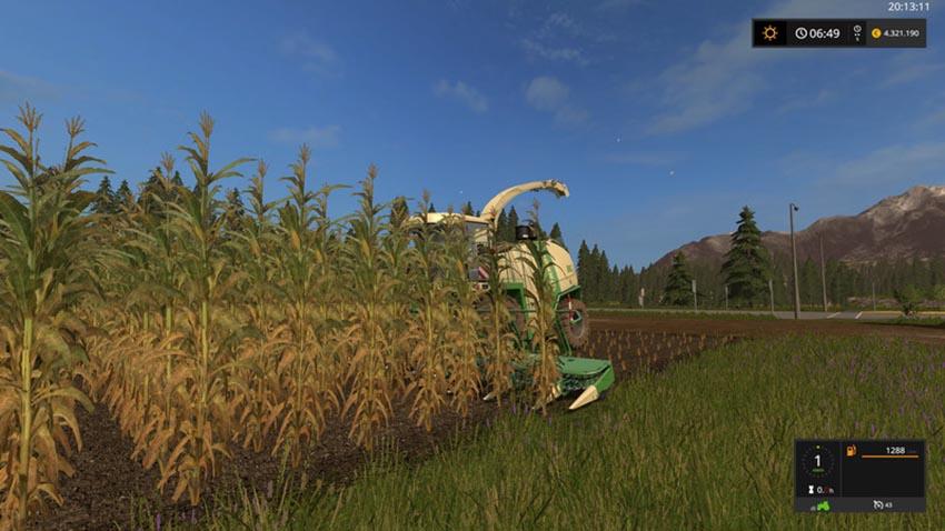 Corn texture V 1.0
