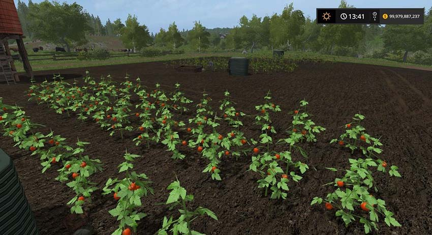 Placeable Tomato field v 1.0
