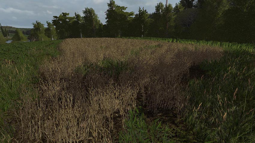 Lupine texture v 1.0