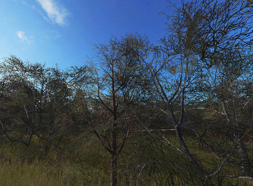 New winter tree textures v 1.0